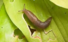 Garden Slugs Must Stop!