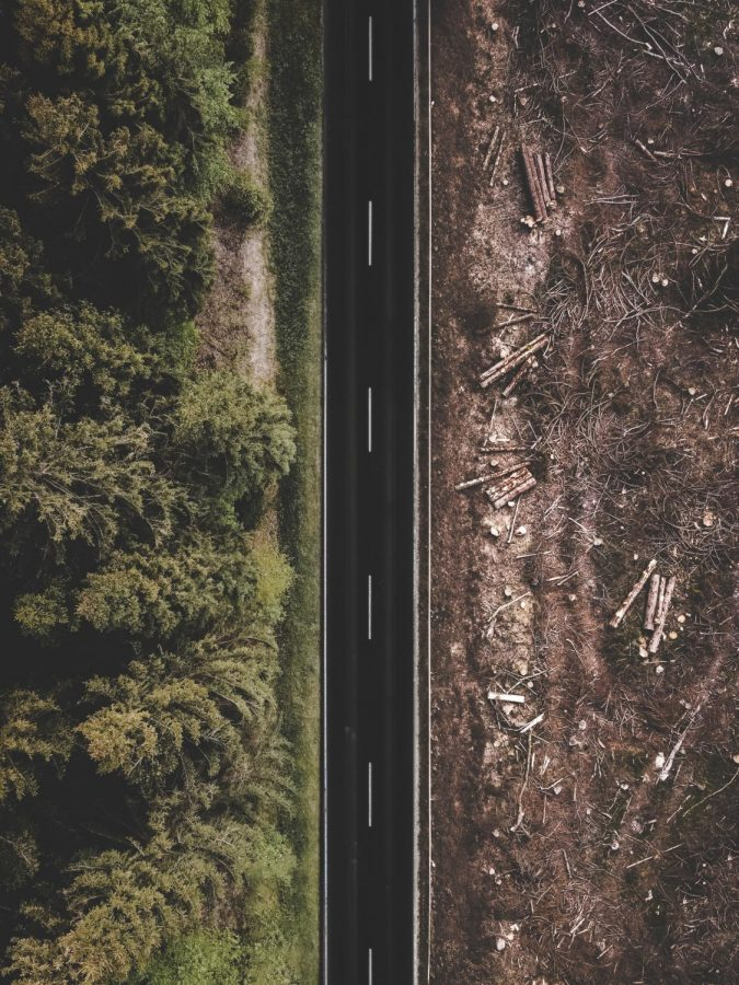 The+Deadly+Paradox+of+Deforestation